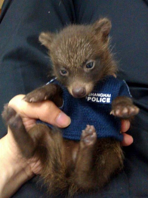 Baby Raccoon Dog Gets Rescued by Police Department